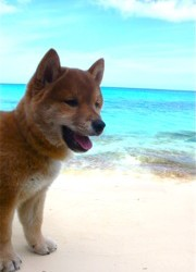 Icewind Puppy in the Bahamas