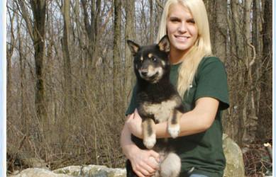 Rescue Shiba Puppy – Kyle