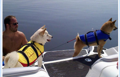 Some Shibas Do Swim
