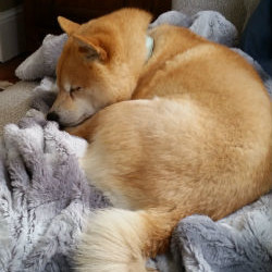 Foxy – Goes to her new home at 4 years old
