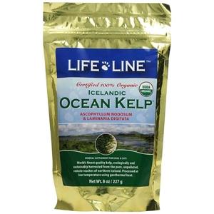 ocean-kelp
